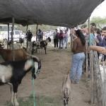 6ta Expo Caprina de Tucumán