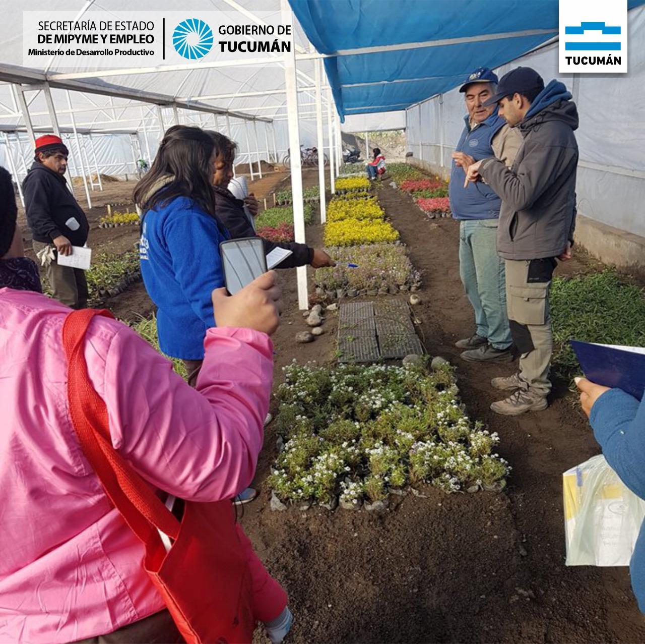 Producción Agroecológica – Diversificación de cultivos naturales